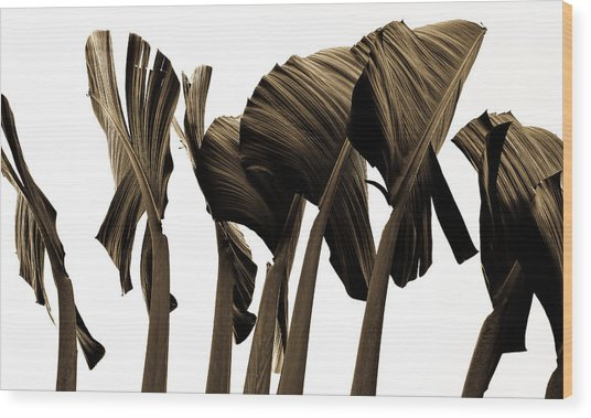 Banana Tree Leafs Wood Print