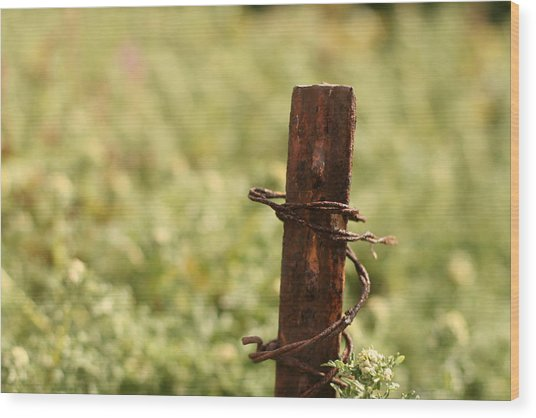 Barbed Wire Green Wood Print