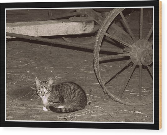 Barn Cat II Wood Print