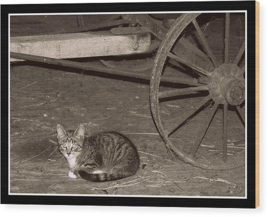 Barn Cat II Wood Print