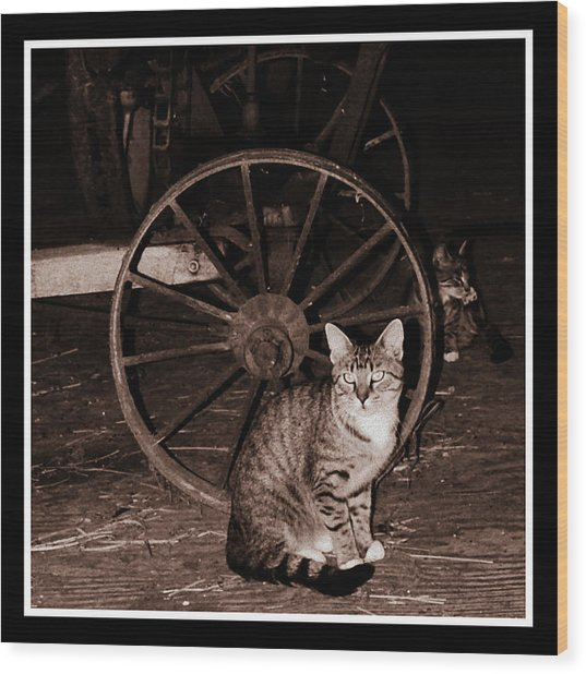 Barn Cat Wood Print