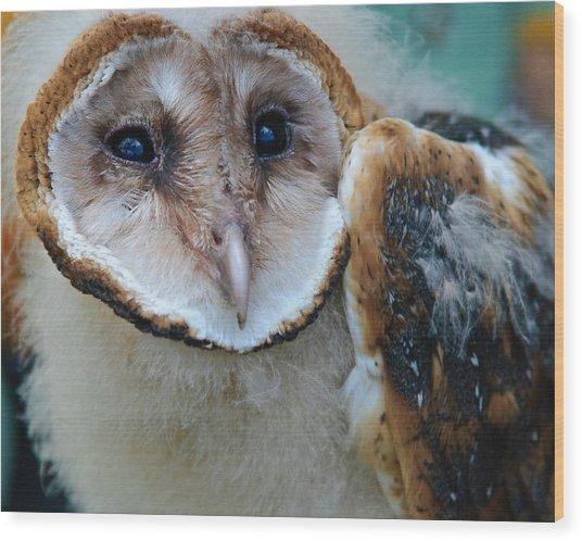 Barn Owlet Wood Print