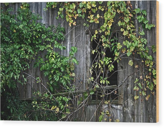 Barn Window Vine Wood Print
