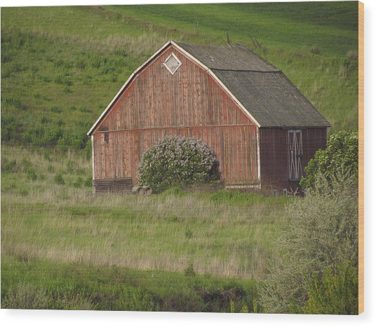 Barns Of The Palouse 6 Wood Print by Tony and Kristi Middleton
