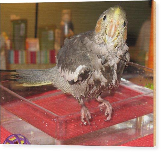 Bath Night For Birdies Wood Print