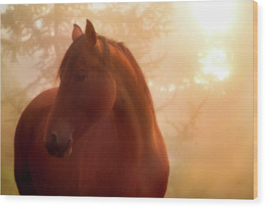 Bay Horse In Fog At Sunrise Wood Print by Anne Louise MacDonald of Hug a Horse Farm