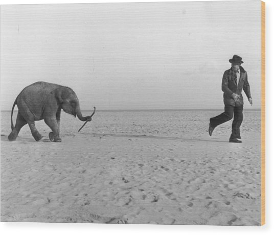 Beach Elephant Wood Print by John Drysdale
