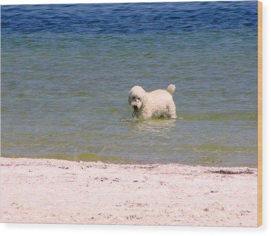 Beach Poodle Wood Print