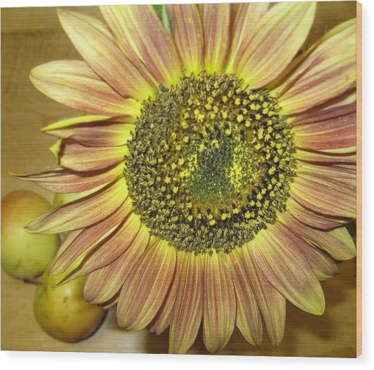 Beaming Sunflower Wood Print by Tracy Fallstrom