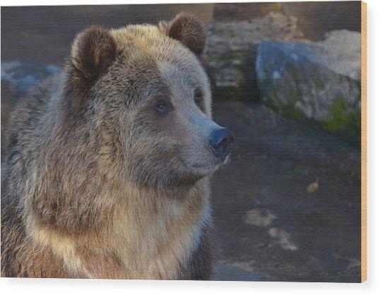 Bear Joy Wood Print
