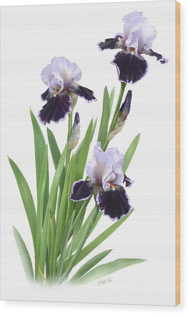 Bearded Iris Trio Wood Print