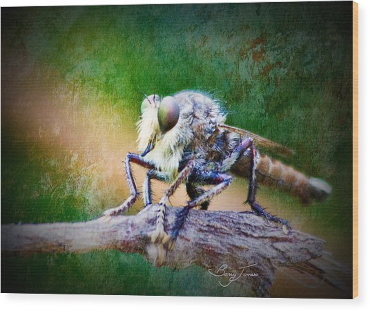 Bearded Robber Fly Wood Print by Barry Jones
