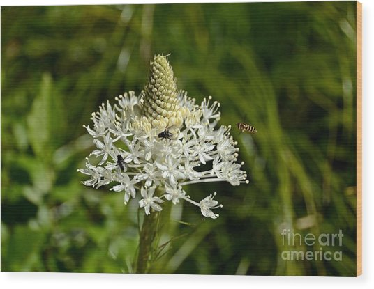 Beargrass Wood Print