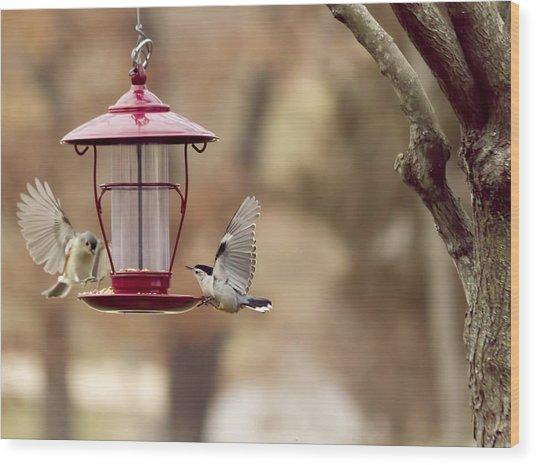 Beautiful Birds Wood Print