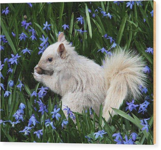 Beautiful Blue Eyes Wood Print