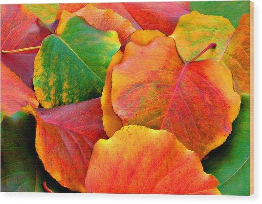 Beautiful Fall Leaves  Wood Print