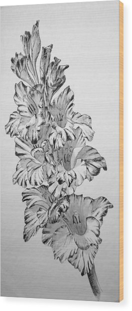 Beautiful Gladiolas Wood Print