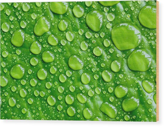 Beautiful Green Leaf With  Water Drops Wood Print by Chatuporn Sornlampoo