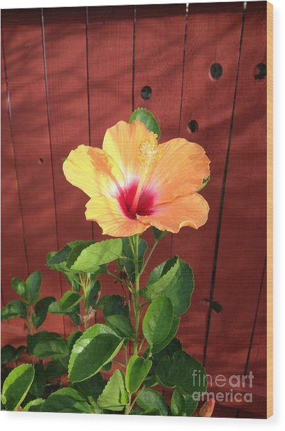 Beautiful Hibiscus Wood Print