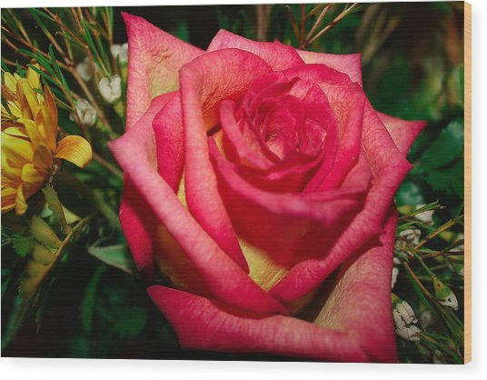Beautiful Rose Wood Print by David Alexander