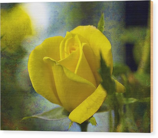 Beauty Of A Yellow Rose Wood Print by J Larry Walker