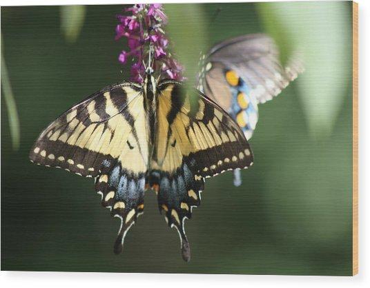 Beauty Of Butterflies  Wood Print by Victoria  Kurlinski