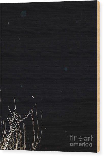 Beauty Unidentified Wood Print
