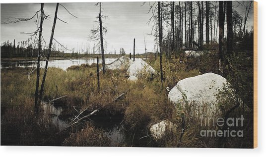 Beaver Pond Wood Print