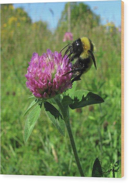 Bee-autiful  Wood Print by Sarah  Lalonde