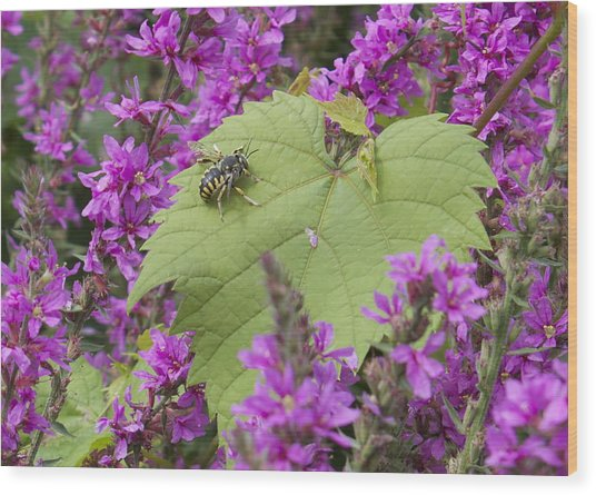 Bee On A Leaf Wood Print