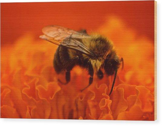 Bee On Orange Flower Wood Print