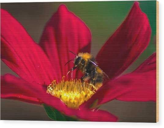 Wood Print featuring the photograph Beebot by Stwayne Keubrick