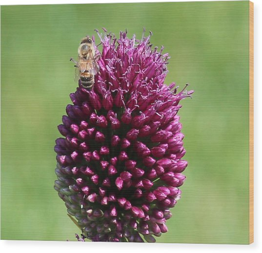 Bee's Delight Wood Print by Janet Mcconnell