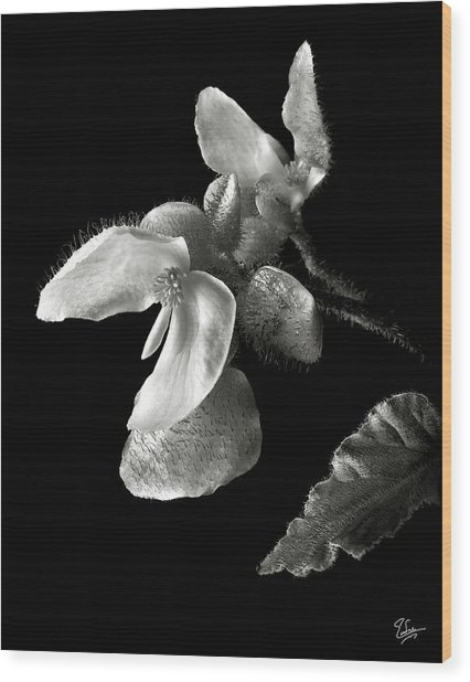 Begonia In Black And White Wood Print