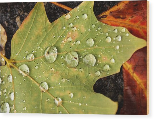 Bejeweled Leaves Wood Print by Matthew Green
