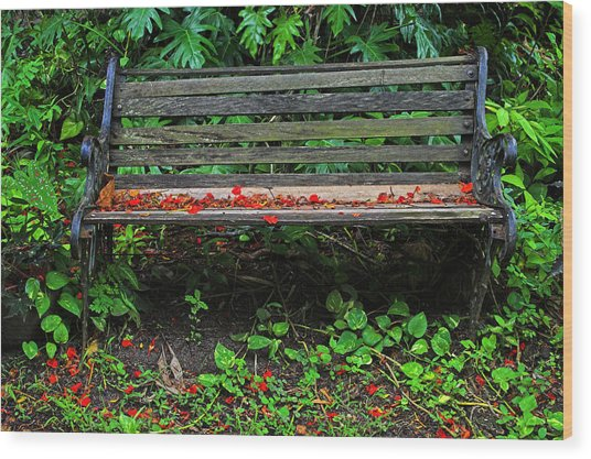 Bench And Flowers- St Lucia. Wood Print by Chester Williams