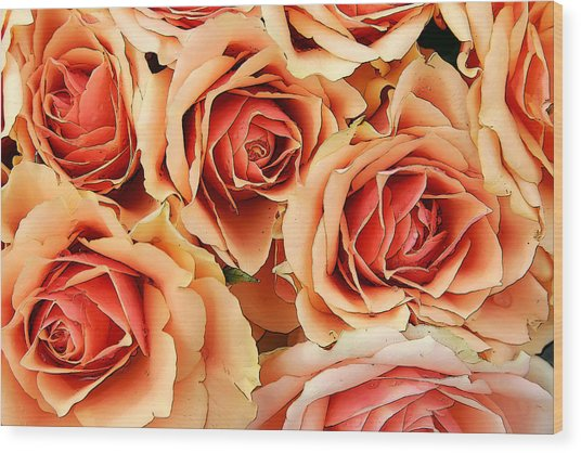 Bergen Roses Wood Print