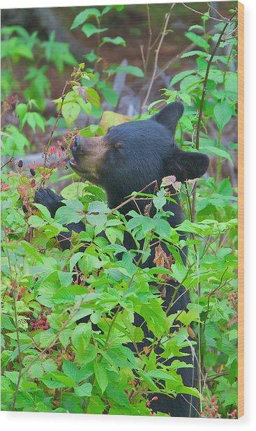 Berry Eating Bear Wood Print