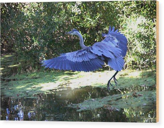 Big Blue In Flight Wood Print