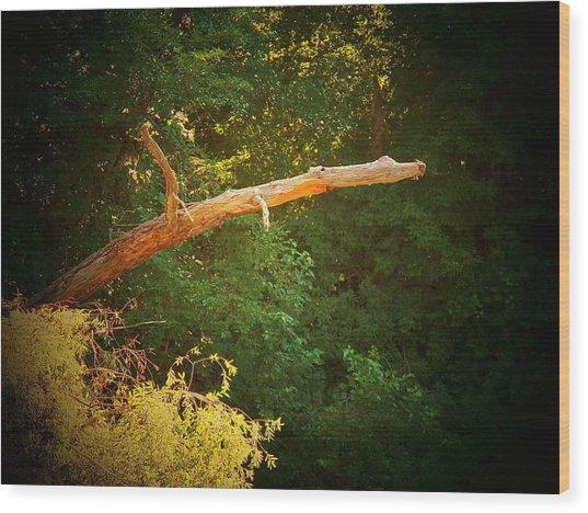 Big Log Wood Print by Joyce Kimble Smith