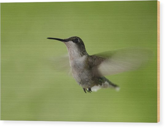 Big Star Humming Bird Wood Print by Dean Bennett