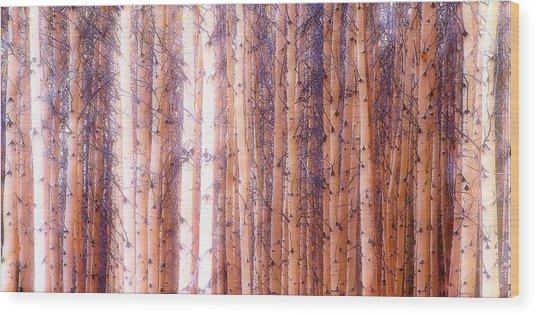 Birch Gathering  Wood Print