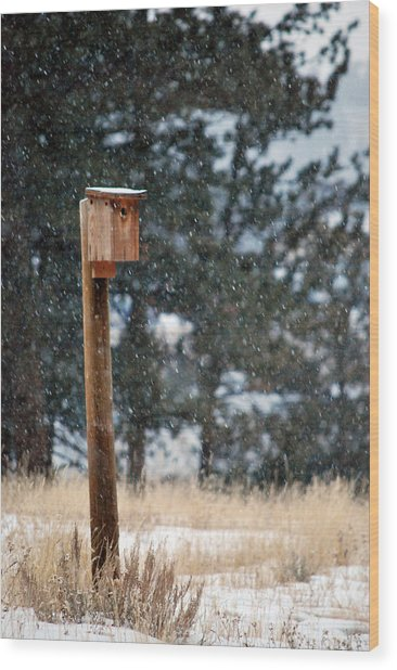 Bird Home Wood Print