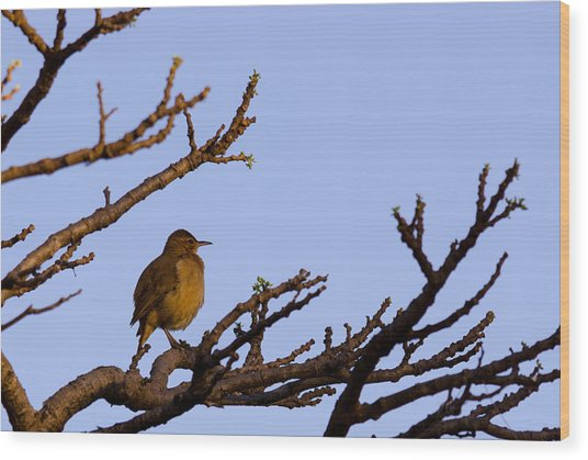 Bird In Dry Tree Wood Print by Joab Souza