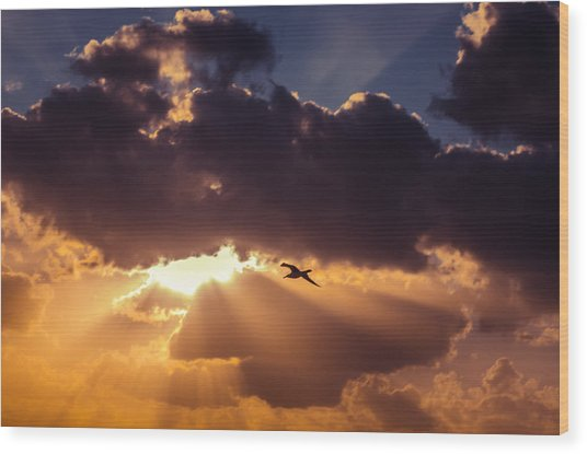 Bird In Sunrise Rays Wood Print