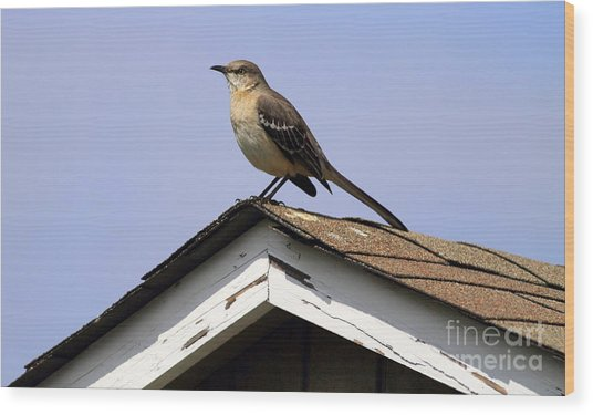 Bird On A Roof Wood Print