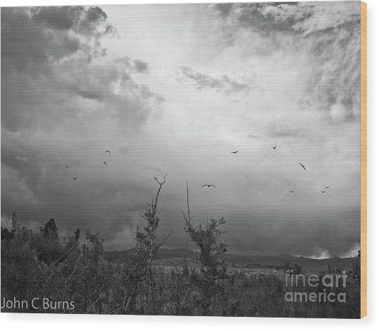 Birds At Mono Lake Wood Print