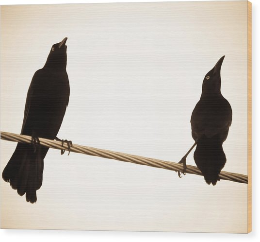 Birds In Black Wood Print