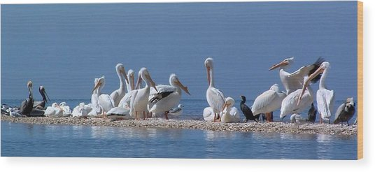 Birds Pelicans Of Cedar Key Wood Print