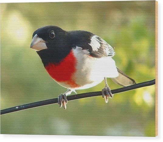 Birds Rose Breasted Grosbeak Wood Print